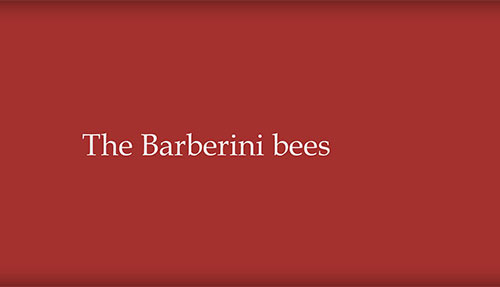 The Corsini Collection: The Barberini Bees Image