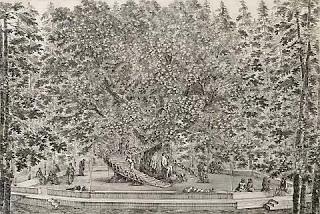http://rfacdn.nz/artgallery/assets/media/blog-journey-enchanted-garden-2.jpg