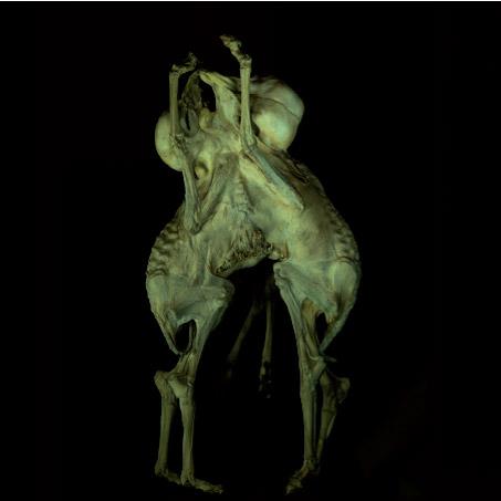 Fiona Pardington: We Dream of Gentle Morpheus Image