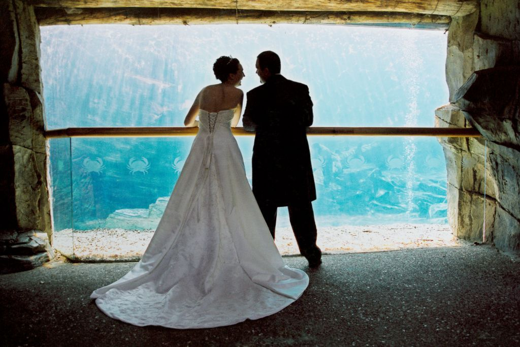 https://rfacdn.nz/conventions/assets/media/sealion-viewing-window-wedding.jpg