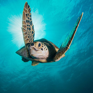 New Dates Confirmed For Blue Planet II Live In Concert