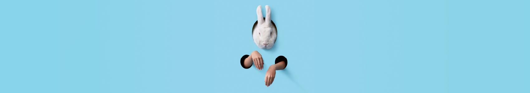White Rabbit, Red Rabbit - one night only!