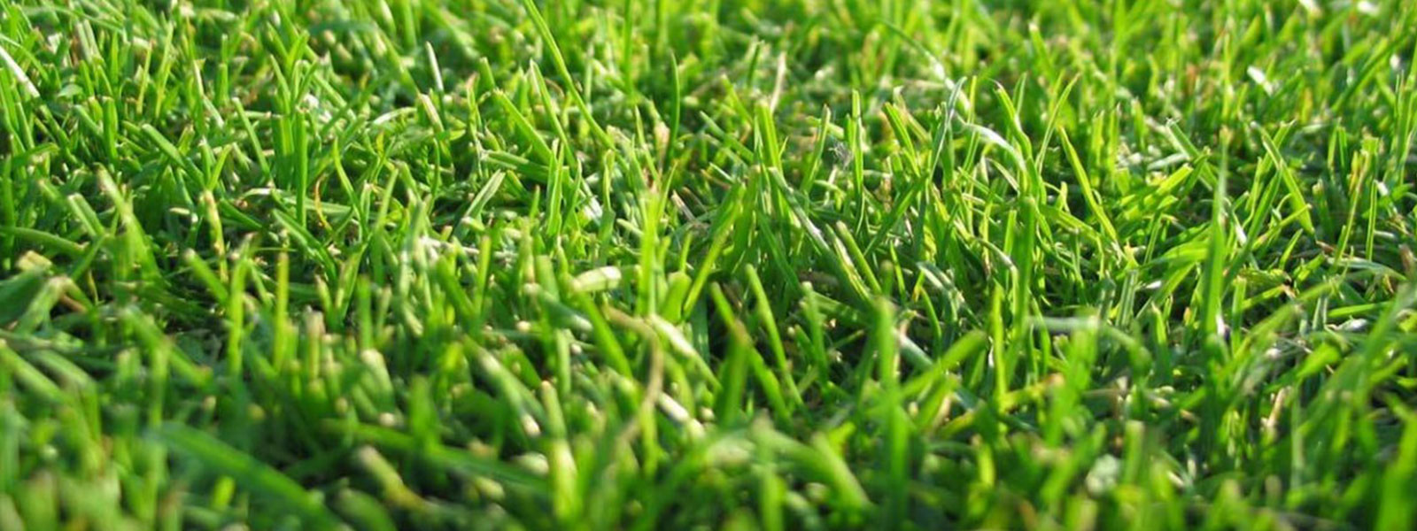 Board to Open Community's First Artificial Turf on North Shore