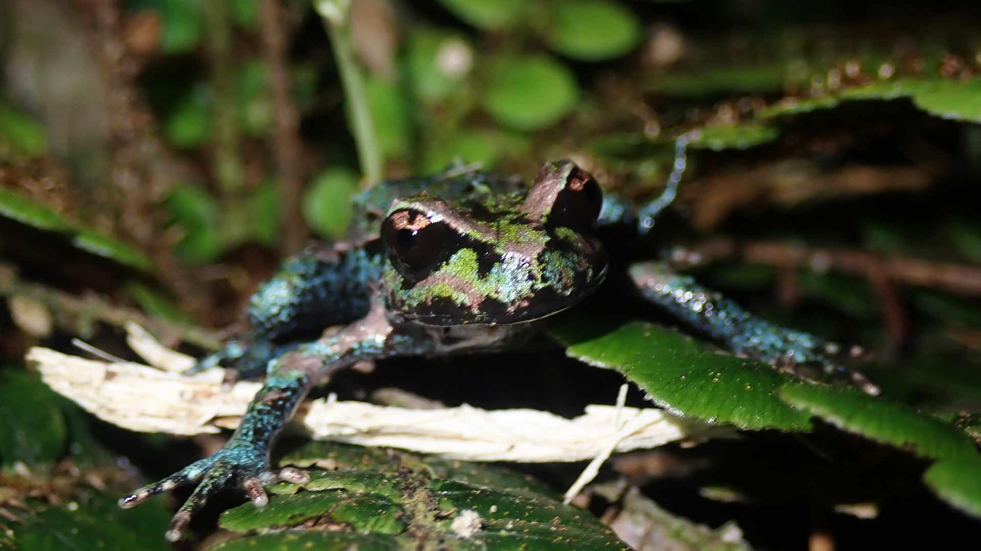 https://rfacdn.nz/zoo/assets/media/archeys-frog-gallery-1-emily.jpg