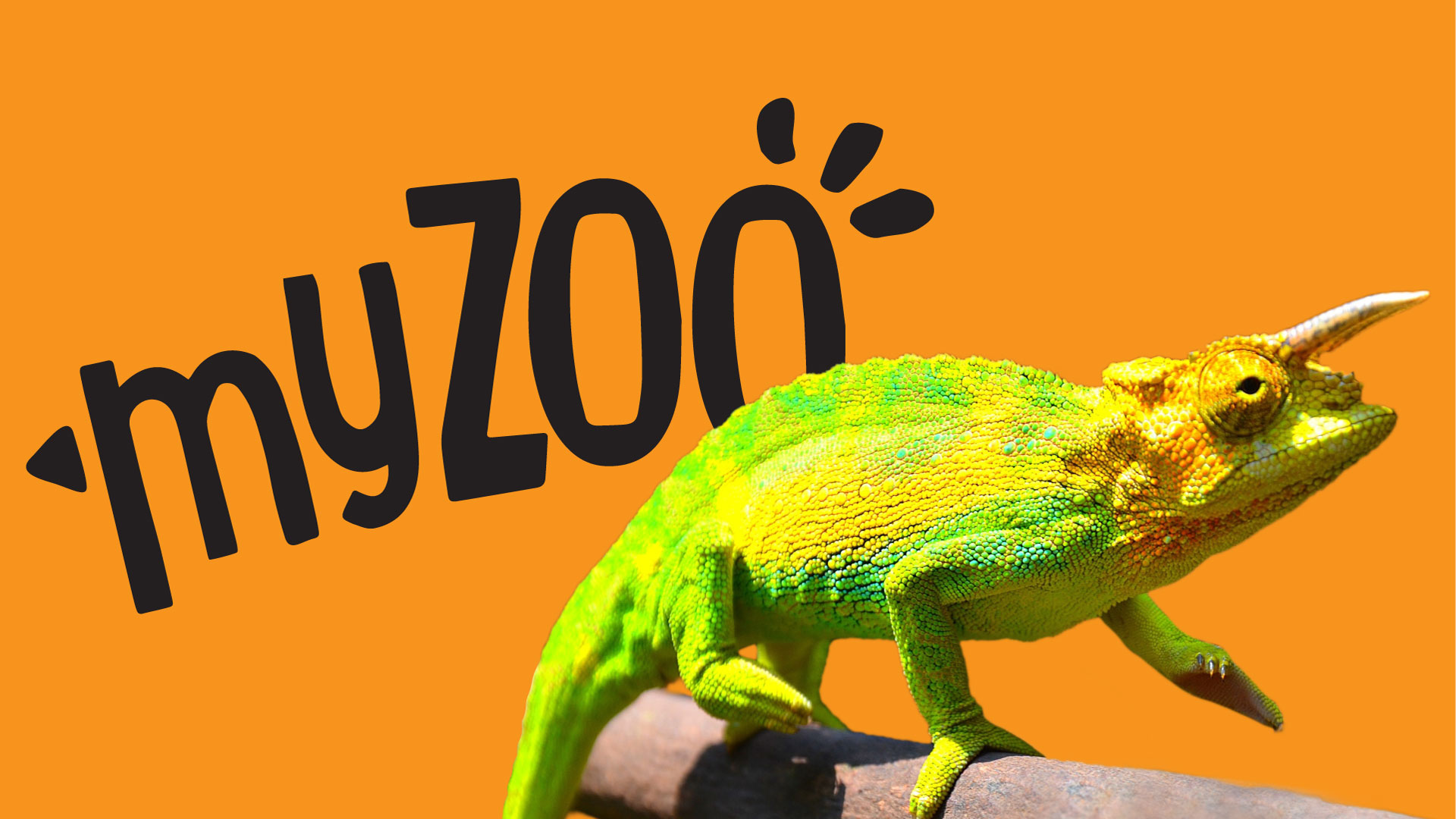 https://rfacdn.nz/zoo/assets/media/azoo-myzoo-chameleon.jpg
