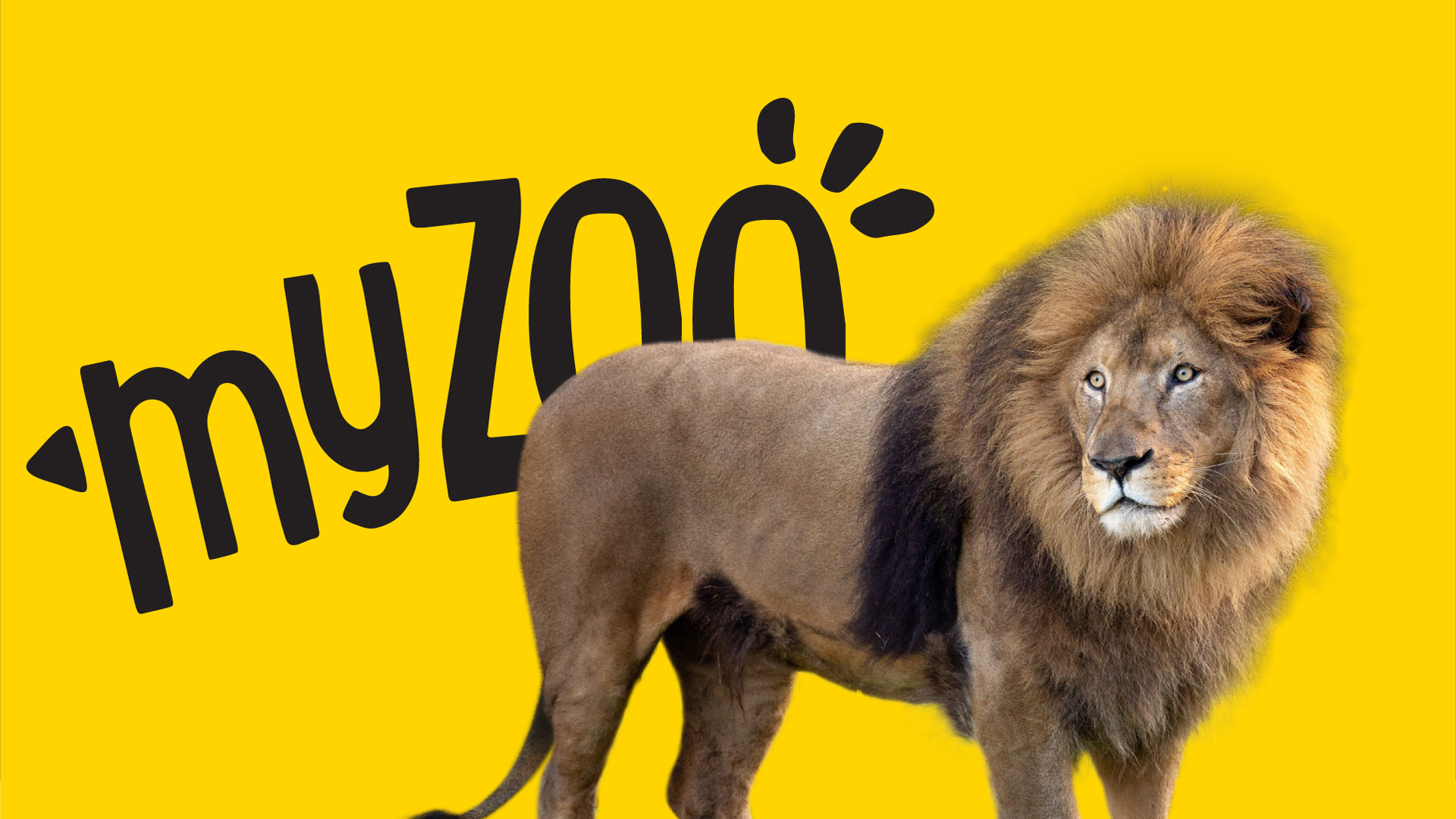 https://rfacdn.nz/zoo/assets/media/azoo-myzoo-lion.jpg