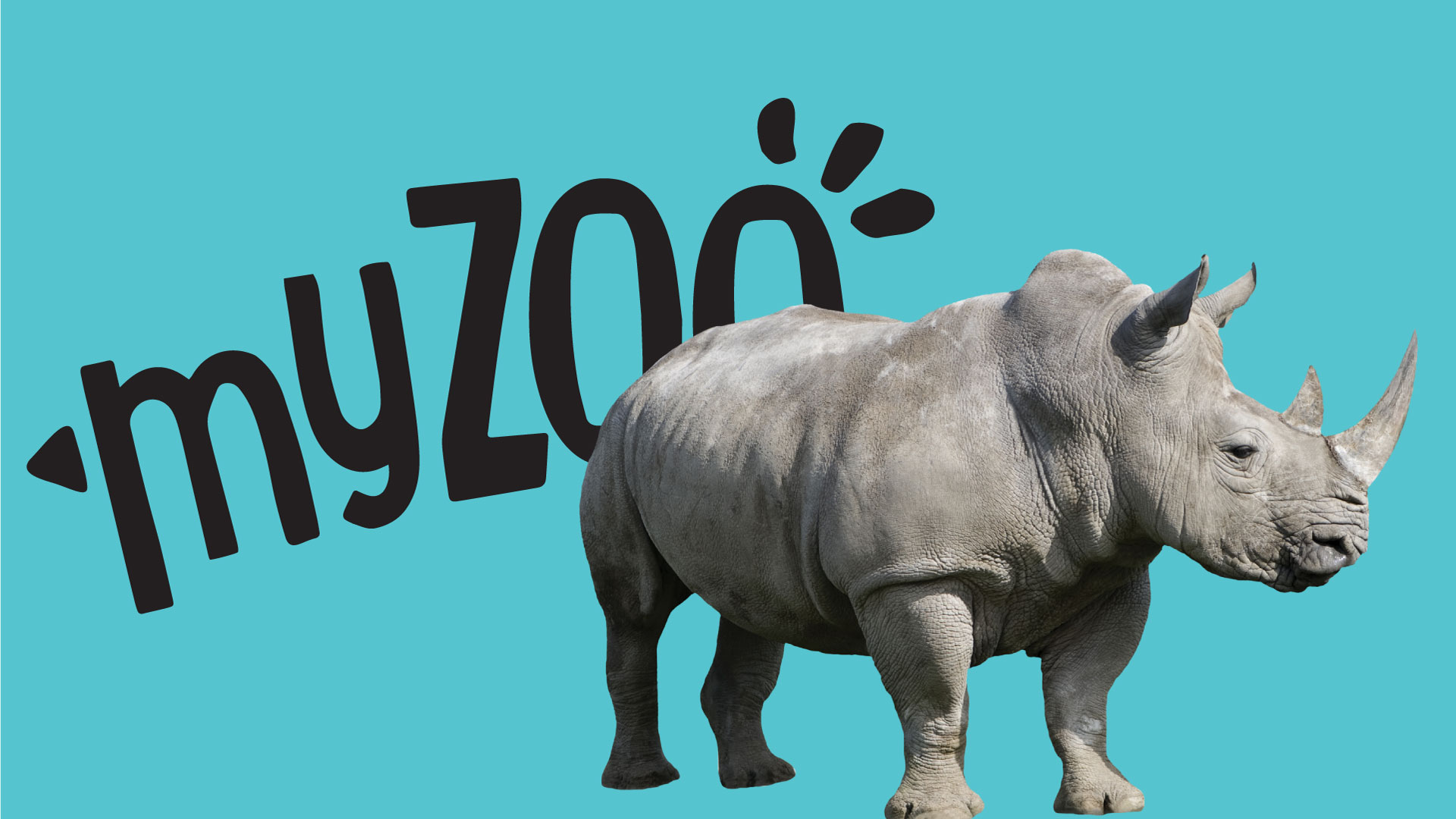 https://rfacdn.nz/zoo/assets/media/azoo-myzoo-rhino.jpg