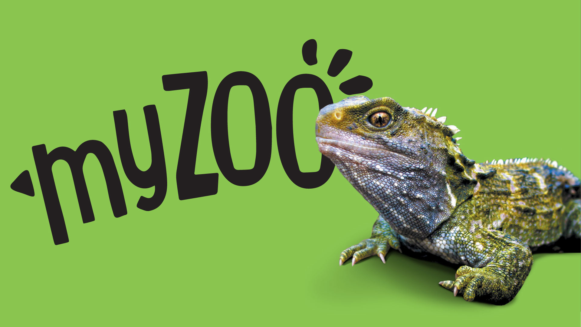 https://rfacdn.nz/zoo/assets/media/azoo-myzoo-tuatara.jpg