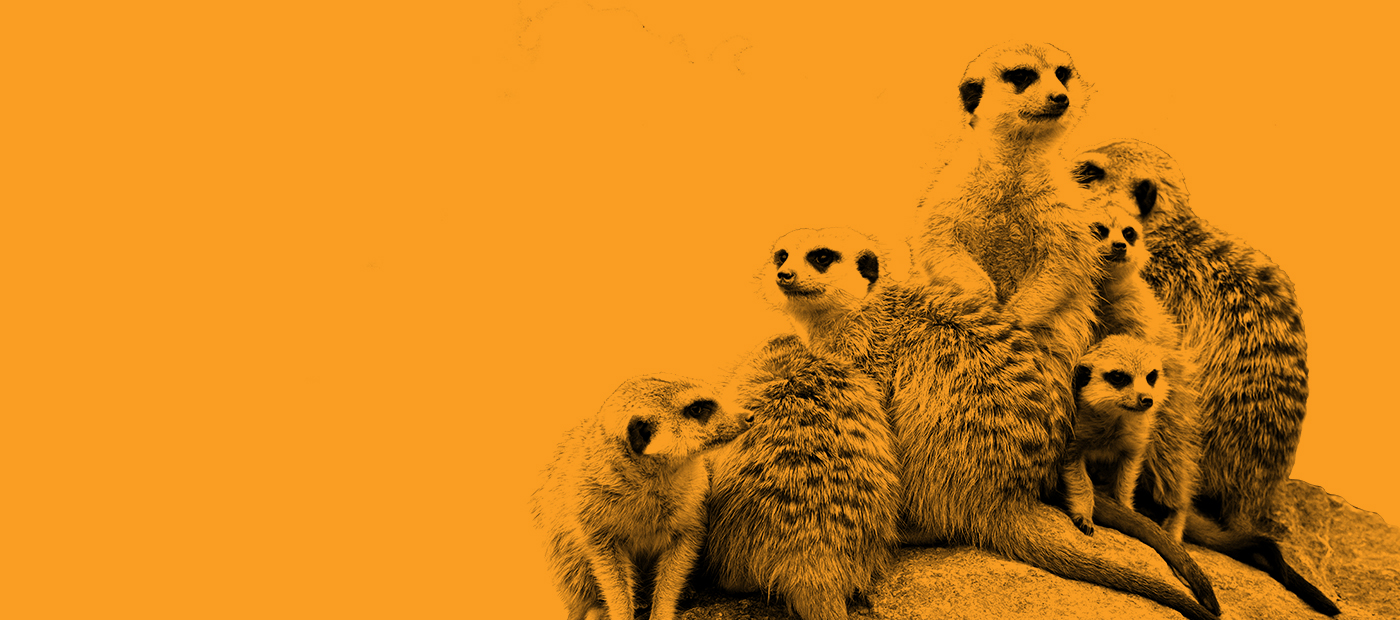 https://rfacdn.nz/zoo/assets/media/azoo-webcam-banner-meerkat-1400x620-ver2.jpg