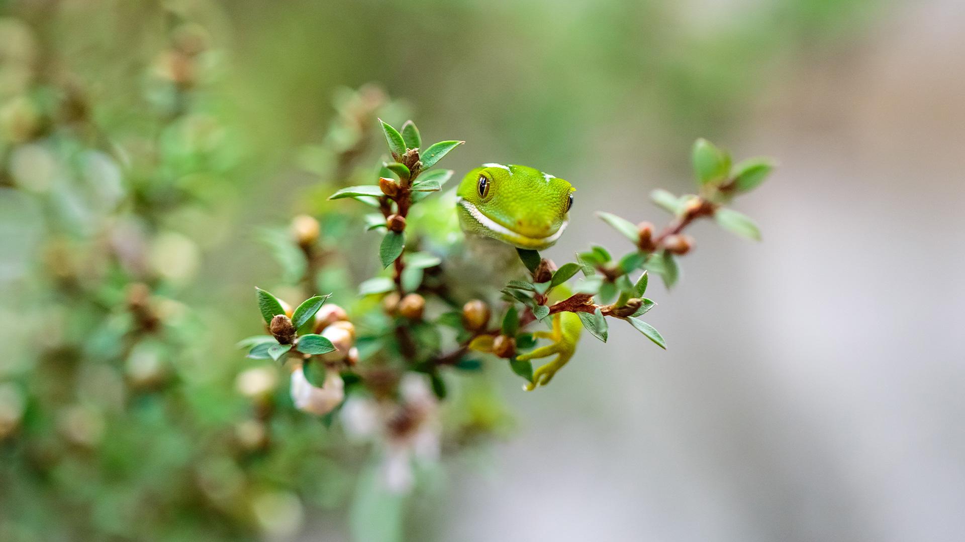 https://rfacdn.nz/zoo/assets/media/azoo-wellbeing-akl-green-gecko.jpg