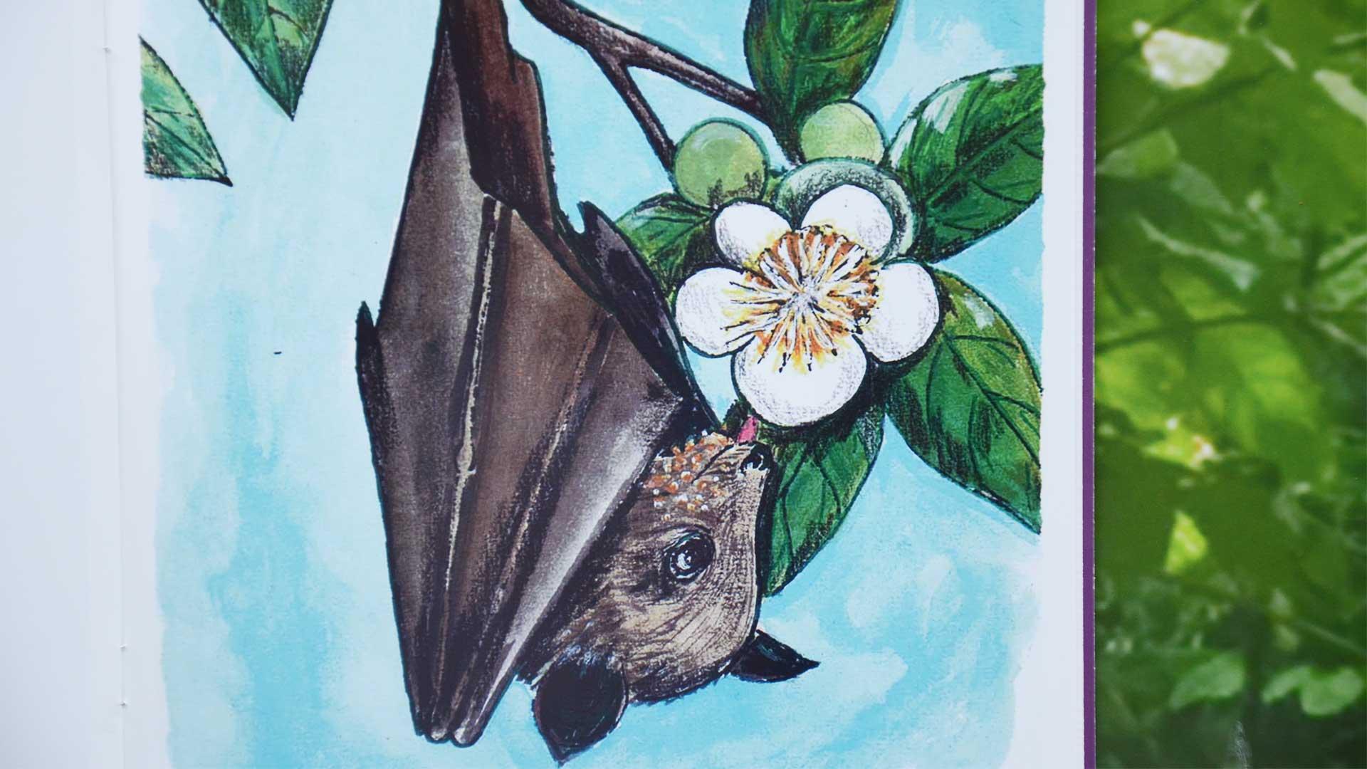 https://rfacdn.nz/zoo/assets/media/bat-book-fiji-gallery-6.jpg