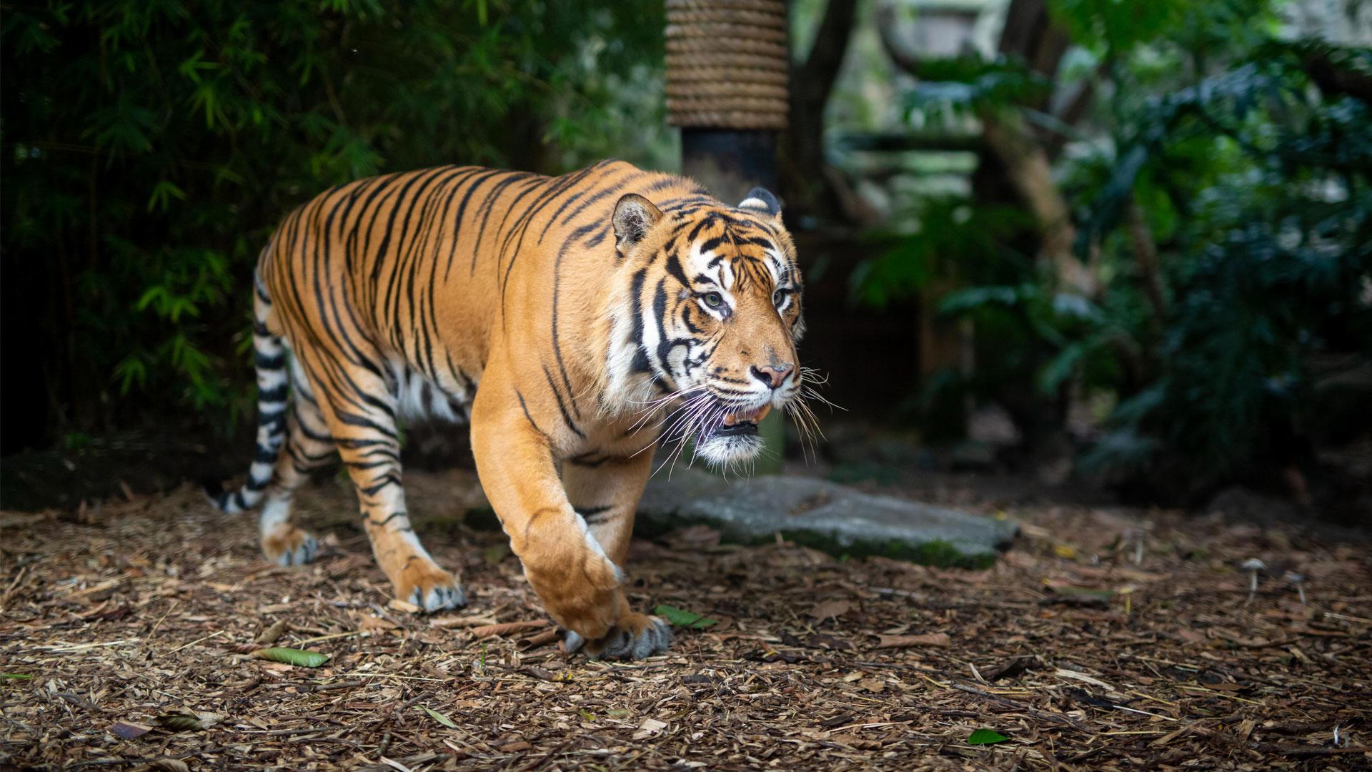 https://rfacdn.nz/zoo/assets/media/berani-gallery-2.jpg