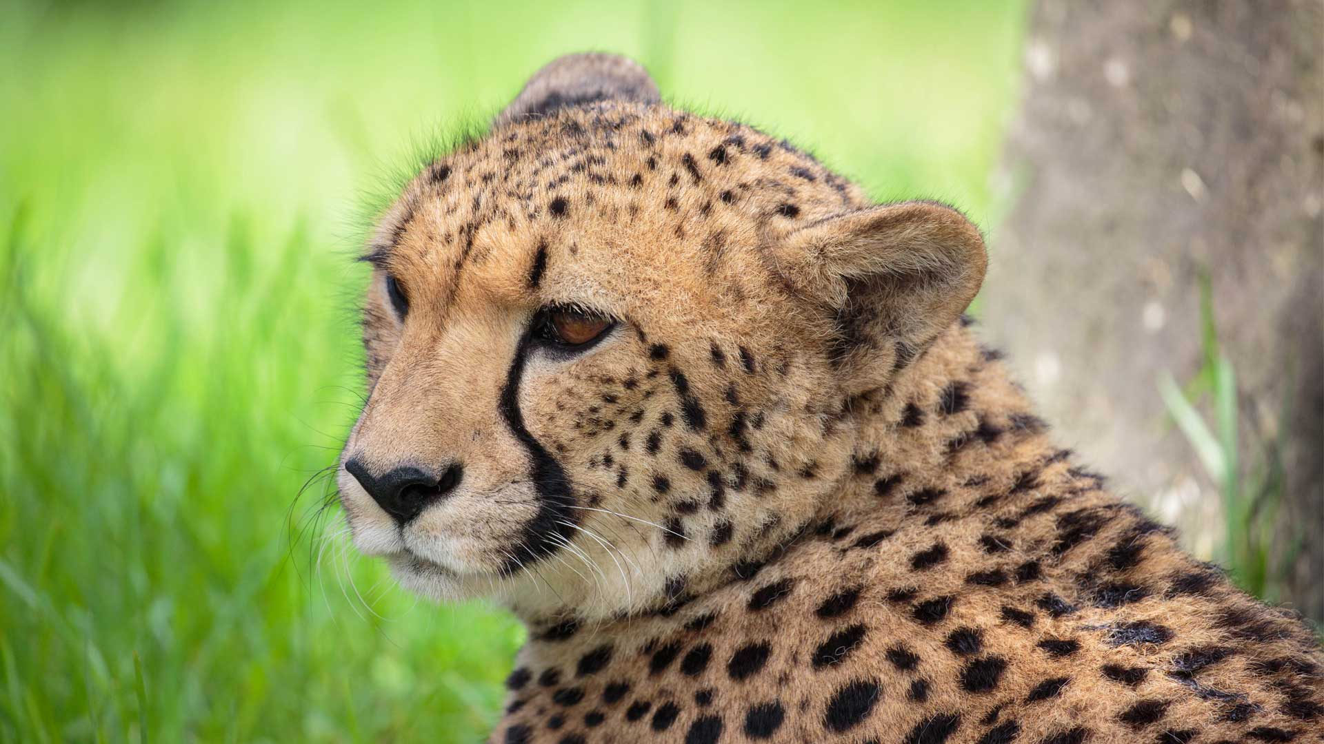 https://rfacdn.nz/zoo/assets/media/cheetah-girls-update-gallery-2.jpg