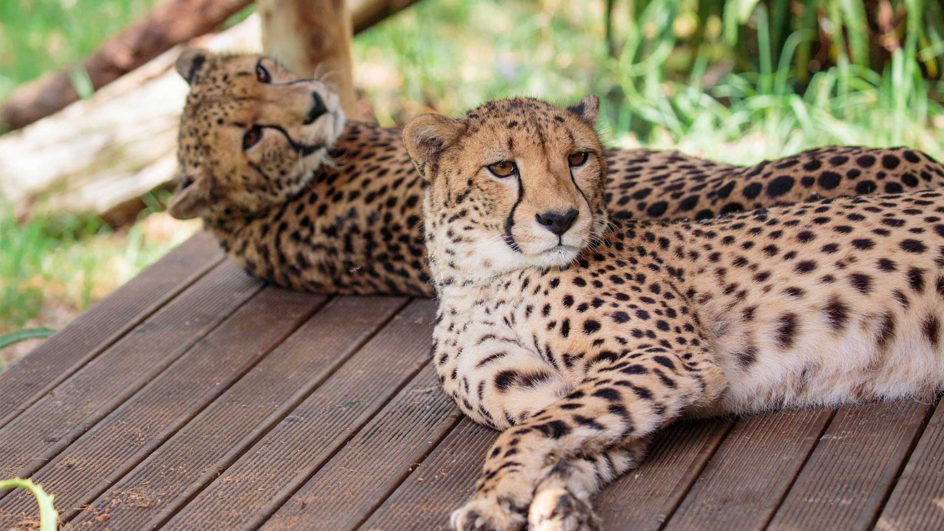 https://rfacdn.nz/zoo/assets/media/cheetah-girls-update-gallery-7.jpg