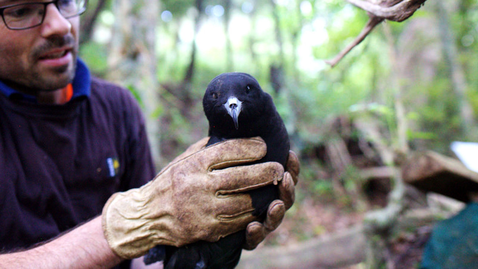 https://rfacdn.nz/zoo/assets/media/conserving-native-seabirds-gallery-2.jpg