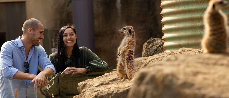 https://rfacdn.nz/zoo/assets/media/couple-meerkat-experience-hero.jpg