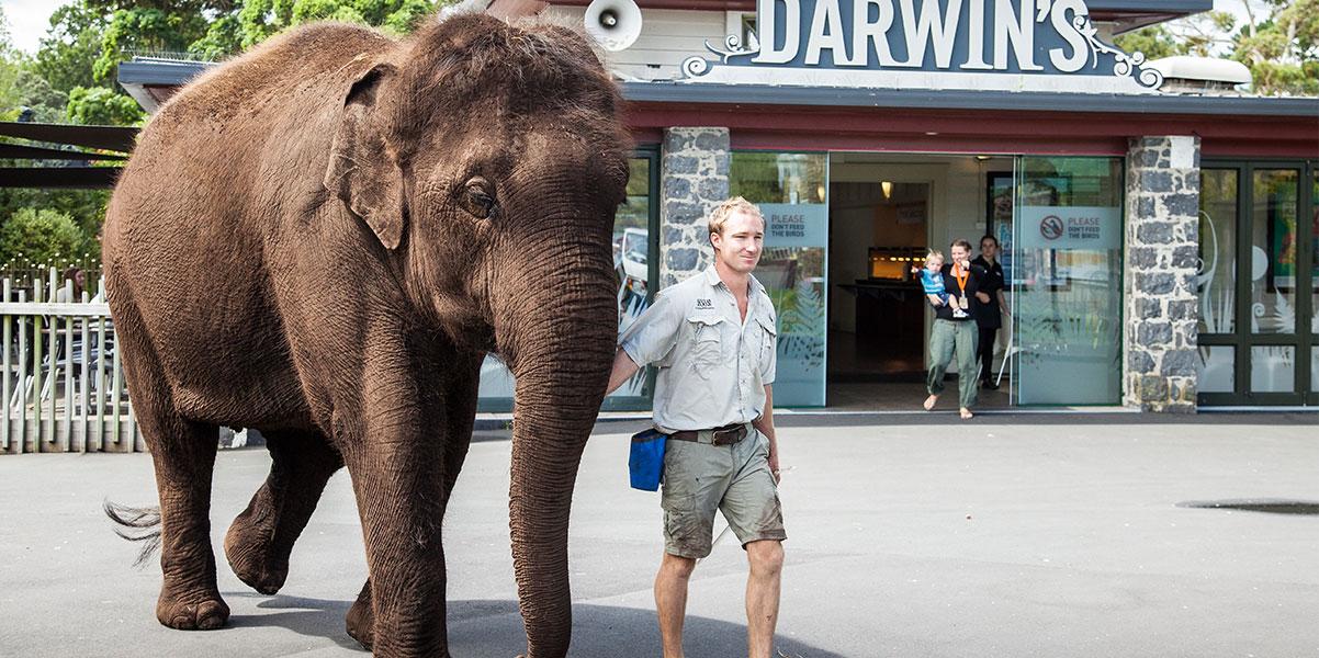 https://rfacdn.nz/zoo/assets/media/elephant-gallery1.jpg