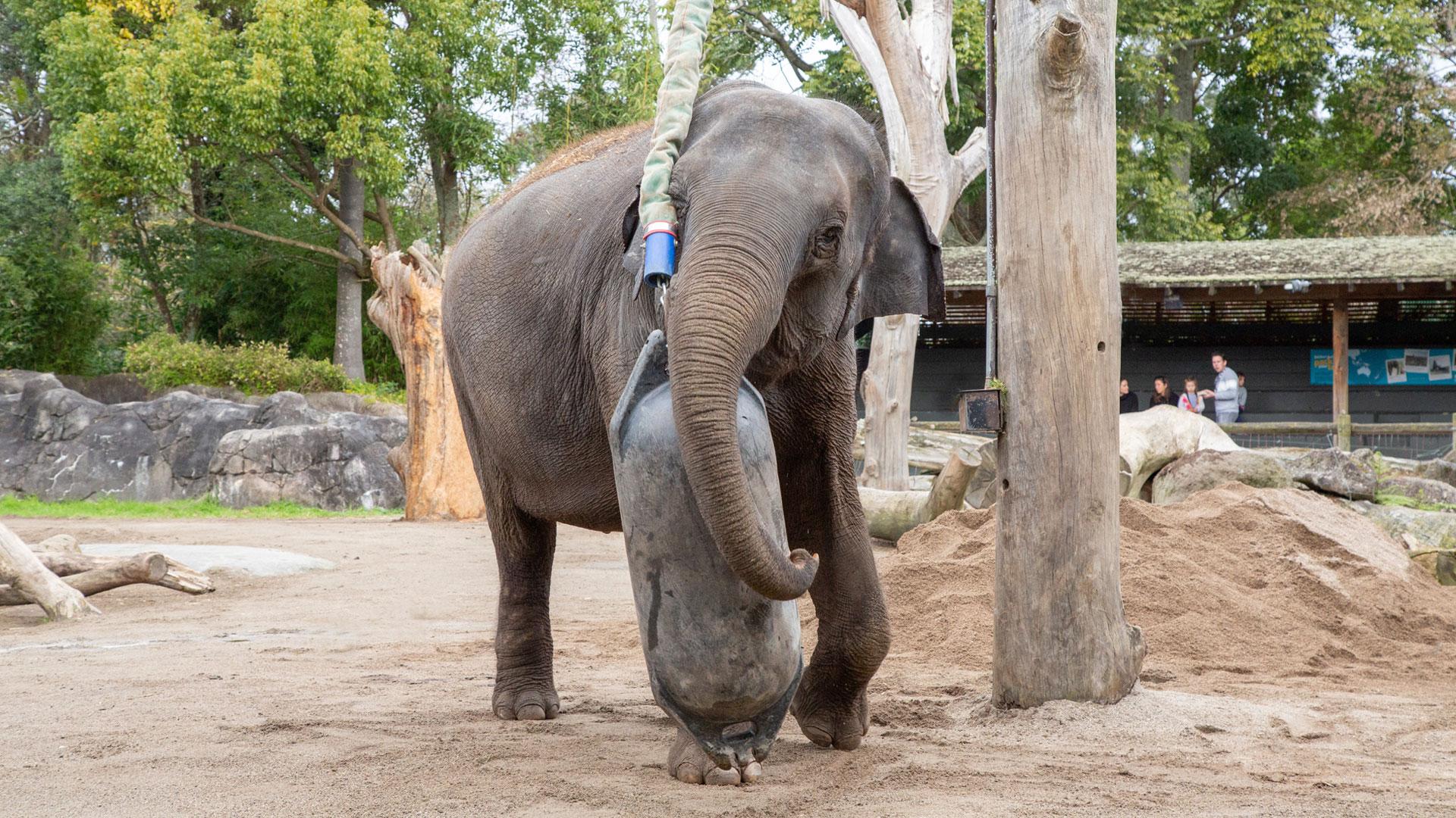 https://rfacdn.nz/zoo/assets/media/elephant-news-gallery-1.jpg