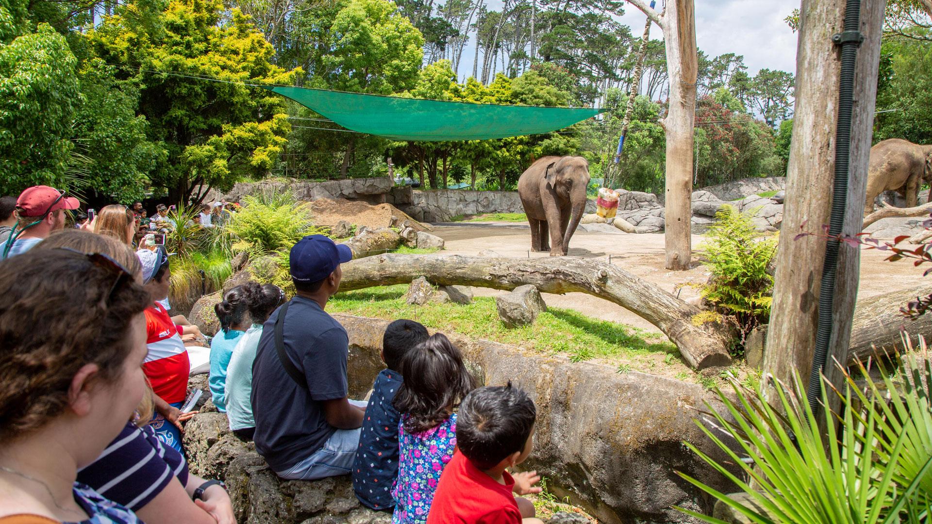 https://rfacdn.nz/zoo/assets/media/elephant-news-gallery-10.jpg