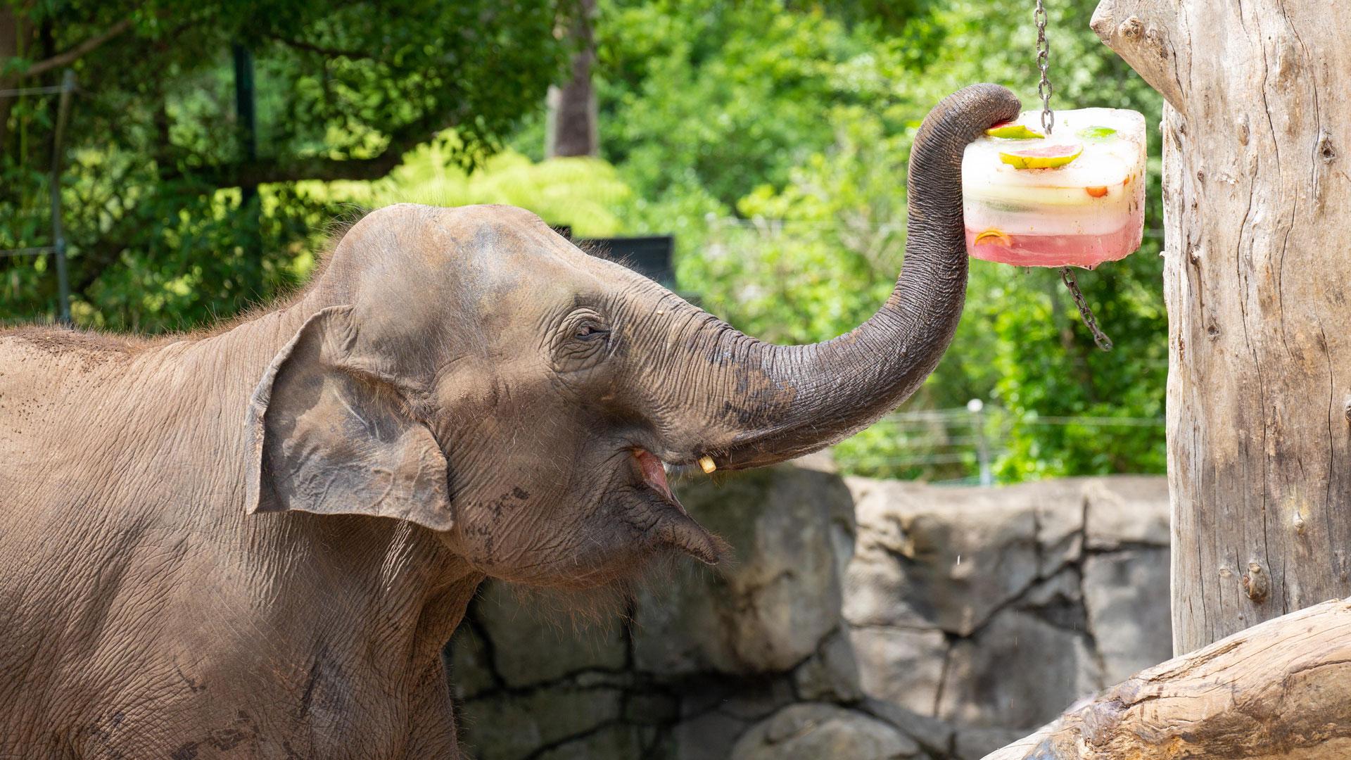 https://rfacdn.nz/zoo/assets/media/elephant-news-gallery-11.jpg