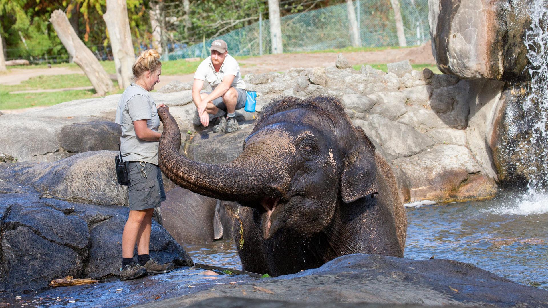 https://rfacdn.nz/zoo/assets/media/elephant-news-gallery-12.jpg