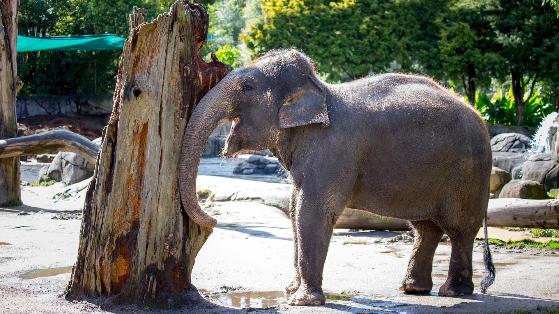 https://rfacdn.nz/zoo/assets/media/elephant-news-gallery-15.jpg