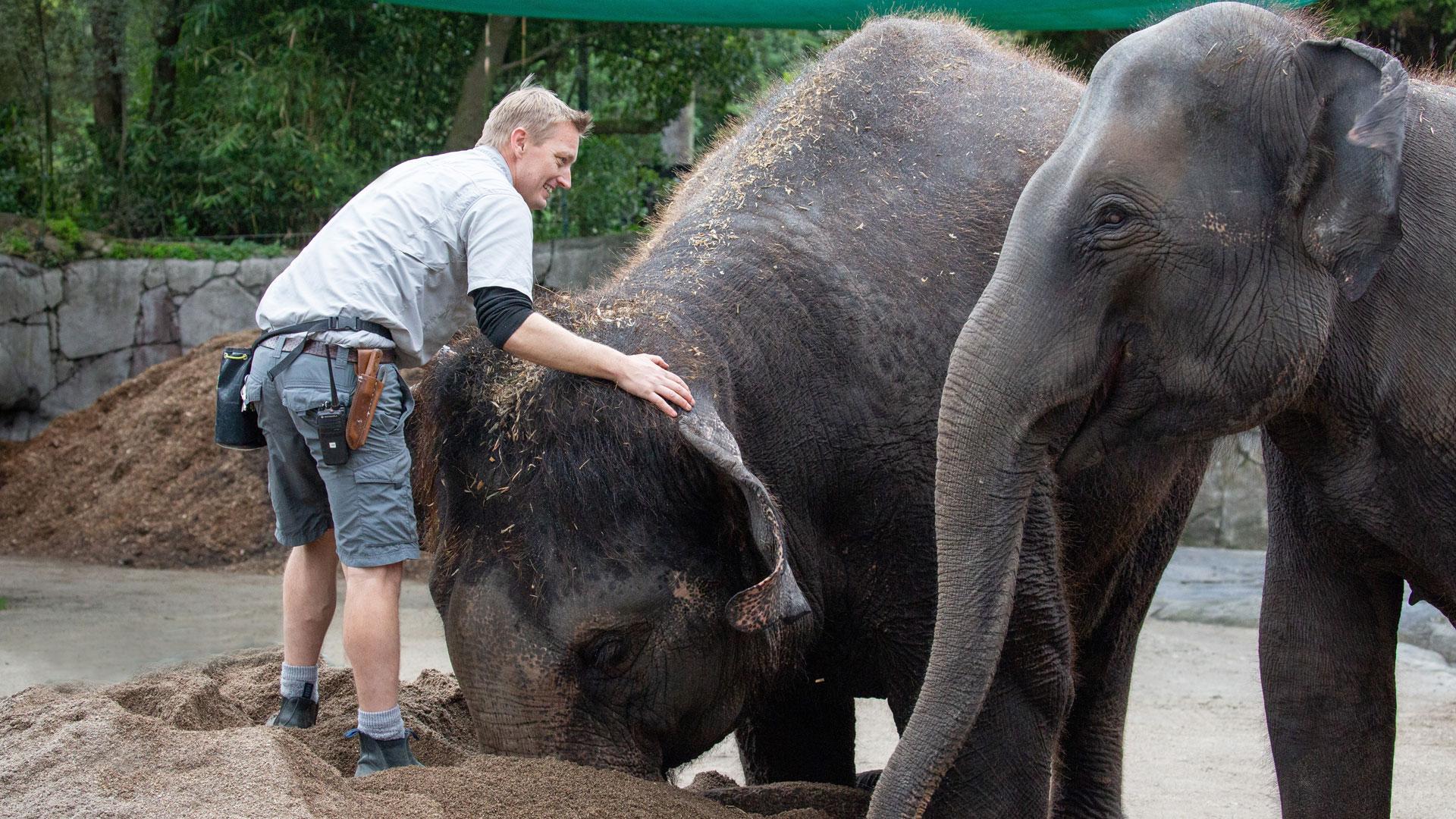 https://rfacdn.nz/zoo/assets/media/elephant-news-gallery-16.jpg