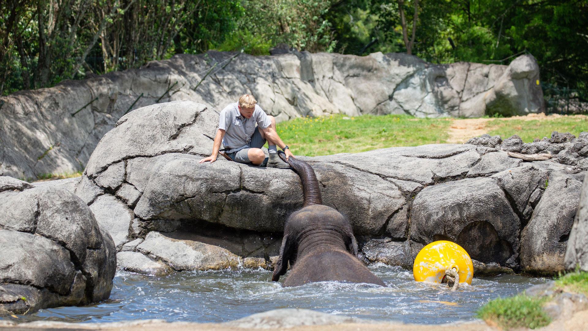 https://rfacdn.nz/zoo/assets/media/elephant-news-gallery-6.jpg