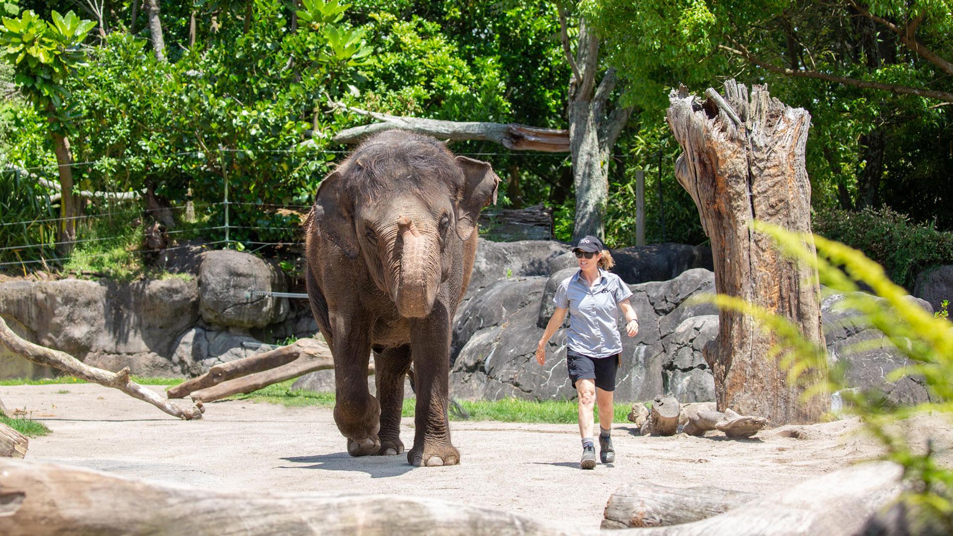 https://rfacdn.nz/zoo/assets/media/elephant-news-gallery-7.jpg