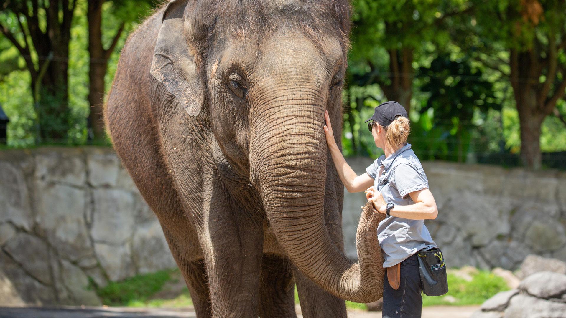 https://rfacdn.nz/zoo/assets/media/elephant-news-gallery-8.jpg