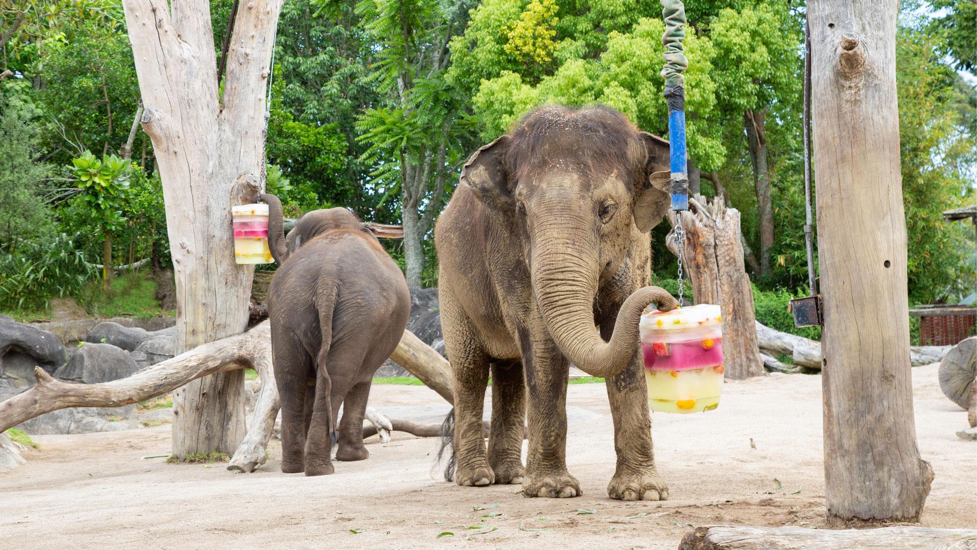 https://rfacdn.nz/zoo/assets/media/elephant-news-gallery-9.jpg