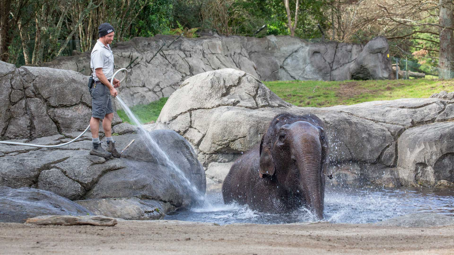 https://rfacdn.nz/zoo/assets/media/elephant-water-gallery-1.jpg