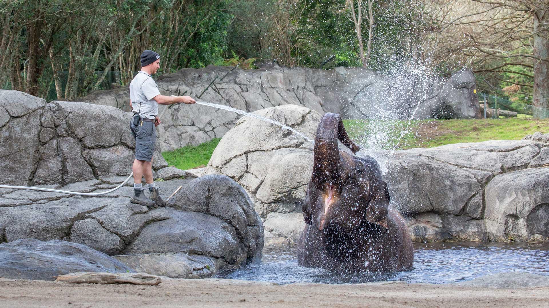 https://rfacdn.nz/zoo/assets/media/elephant-water-gallery-2.jpg