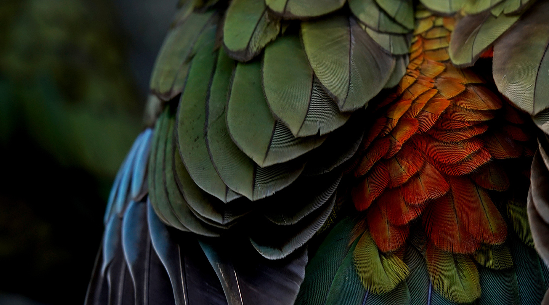 https://rfacdn.nz/zoo/assets/media/feathers-homepage.jpg