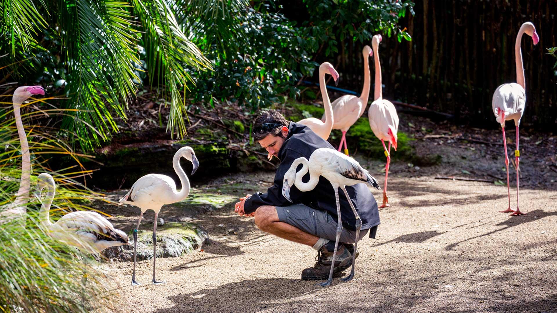 https://rfacdn.nz/zoo/assets/media/flamingo-gallery-1.jpg