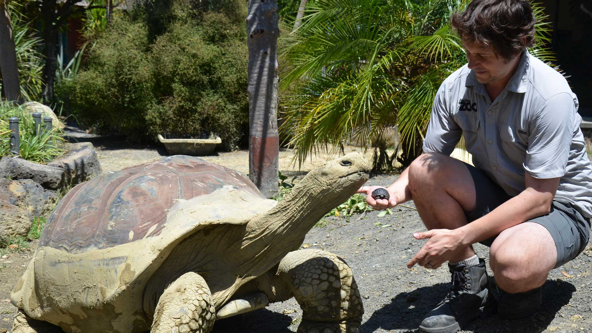 https://rfacdn.nz/zoo/assets/media/galapagos-hatching-with-don-gallery-1.jpg