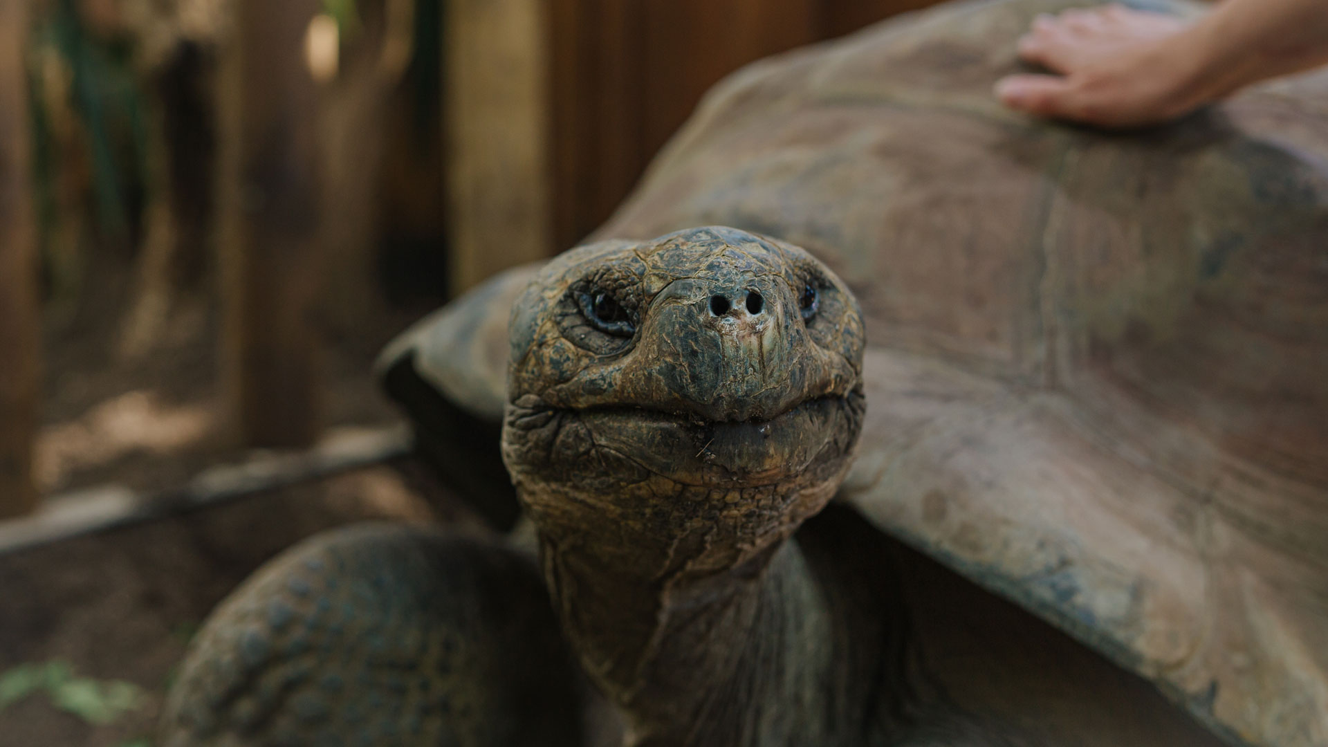 https://rfacdn.nz/zoo/assets/media/galapagos-tortoise-hatchlings-gallery-4.jpg