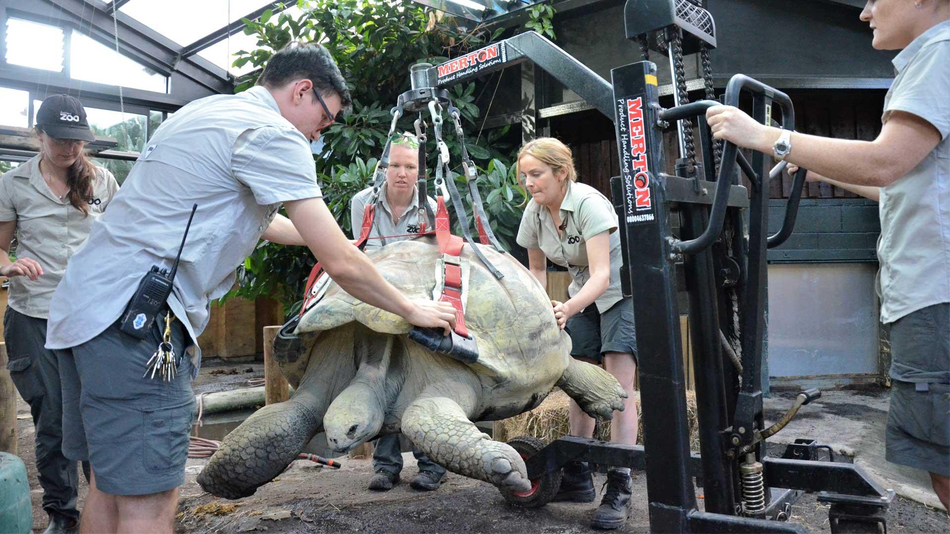 https://rfacdn.nz/zoo/assets/media/galapagos-tortoise-xray-gallery-3.jpg