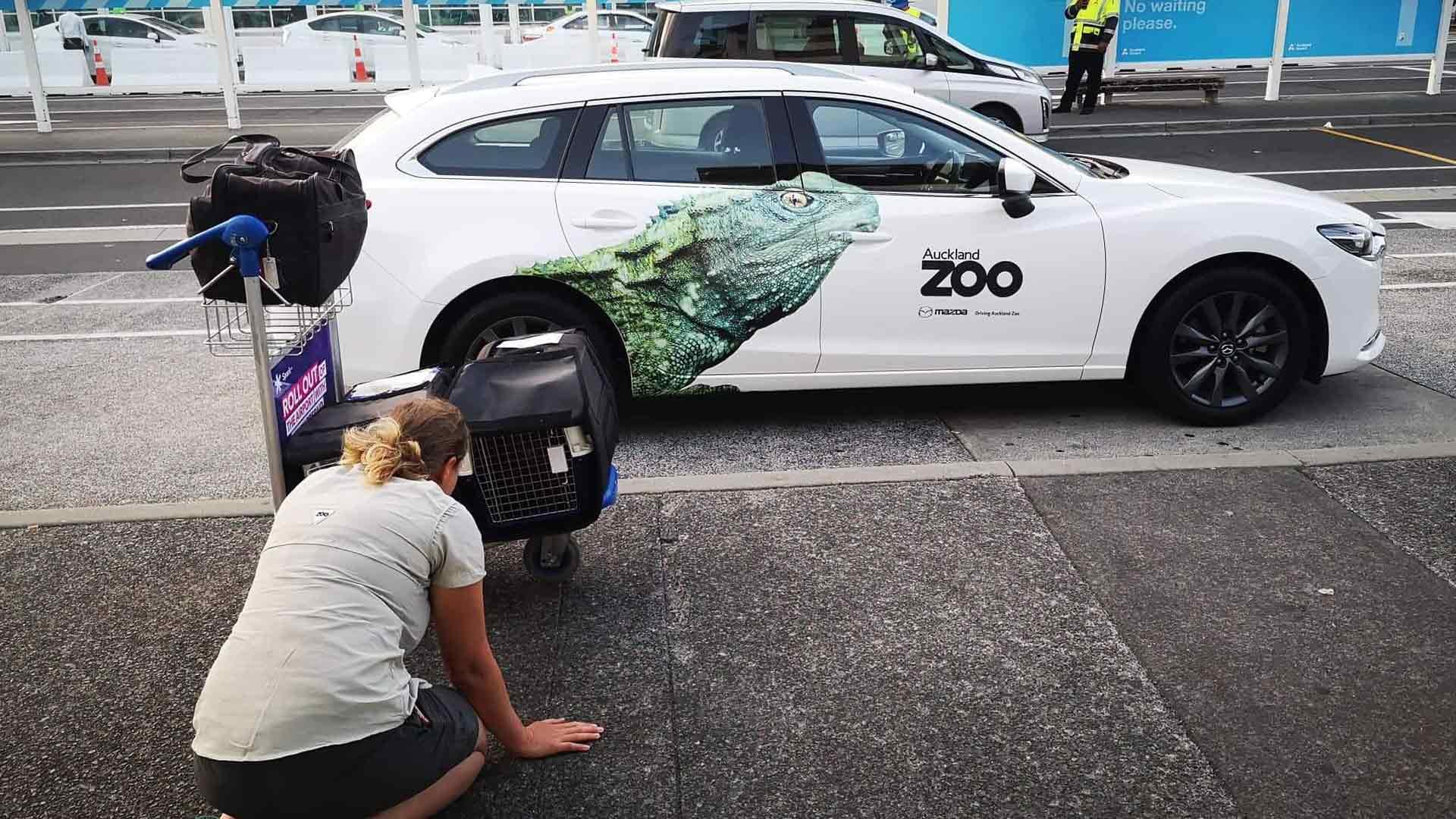 https://rfacdn.nz/zoo/assets/media/gallery-1-for-flying-home.jpg