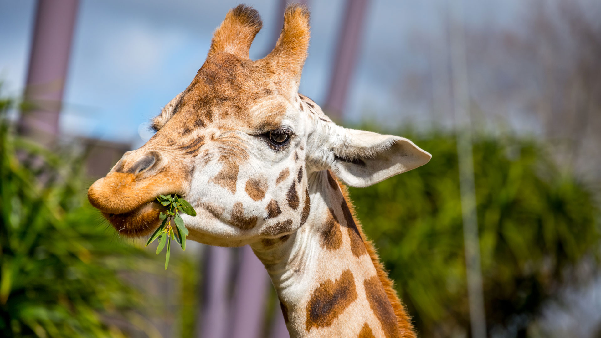 https://rfacdn.nz/zoo/assets/media/giraffe-gallery-1.jpg