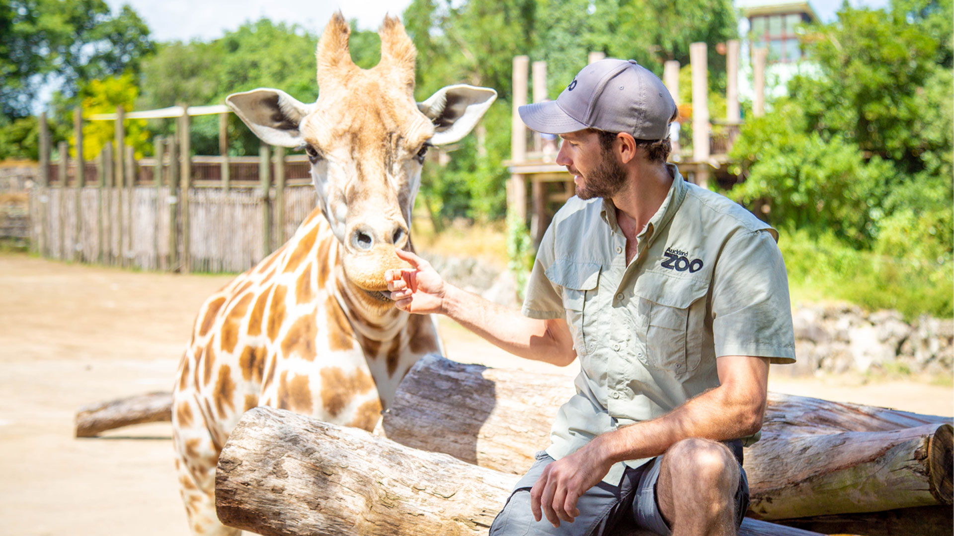 https://rfacdn.nz/zoo/assets/media/giraffe-with-ben-gallery-1.jpg
