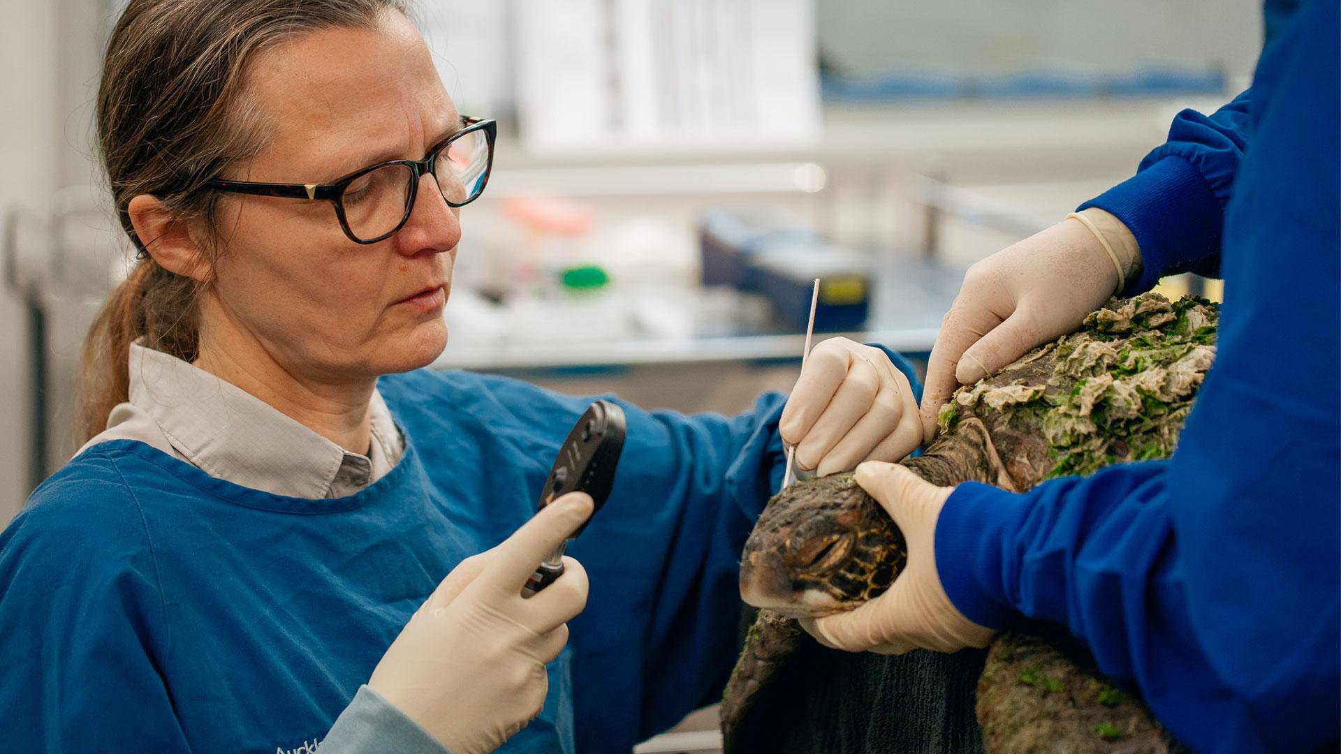 https://rfacdn.nz/zoo/assets/media/green-sea-turtle-an-gallery-1.jpg
