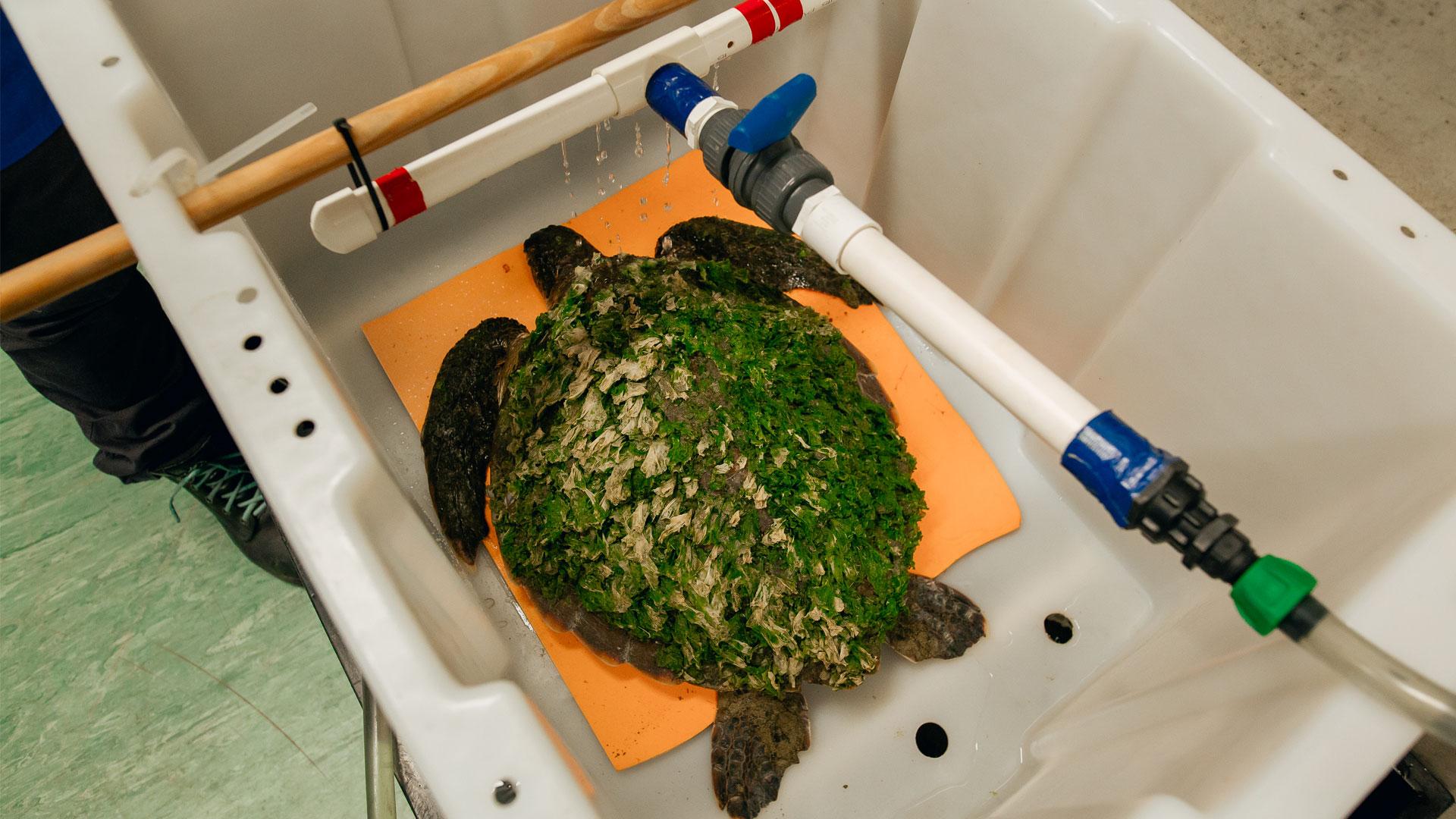 https://rfacdn.nz/zoo/assets/media/green-sea-turtle-an-gallery-6.jpg
