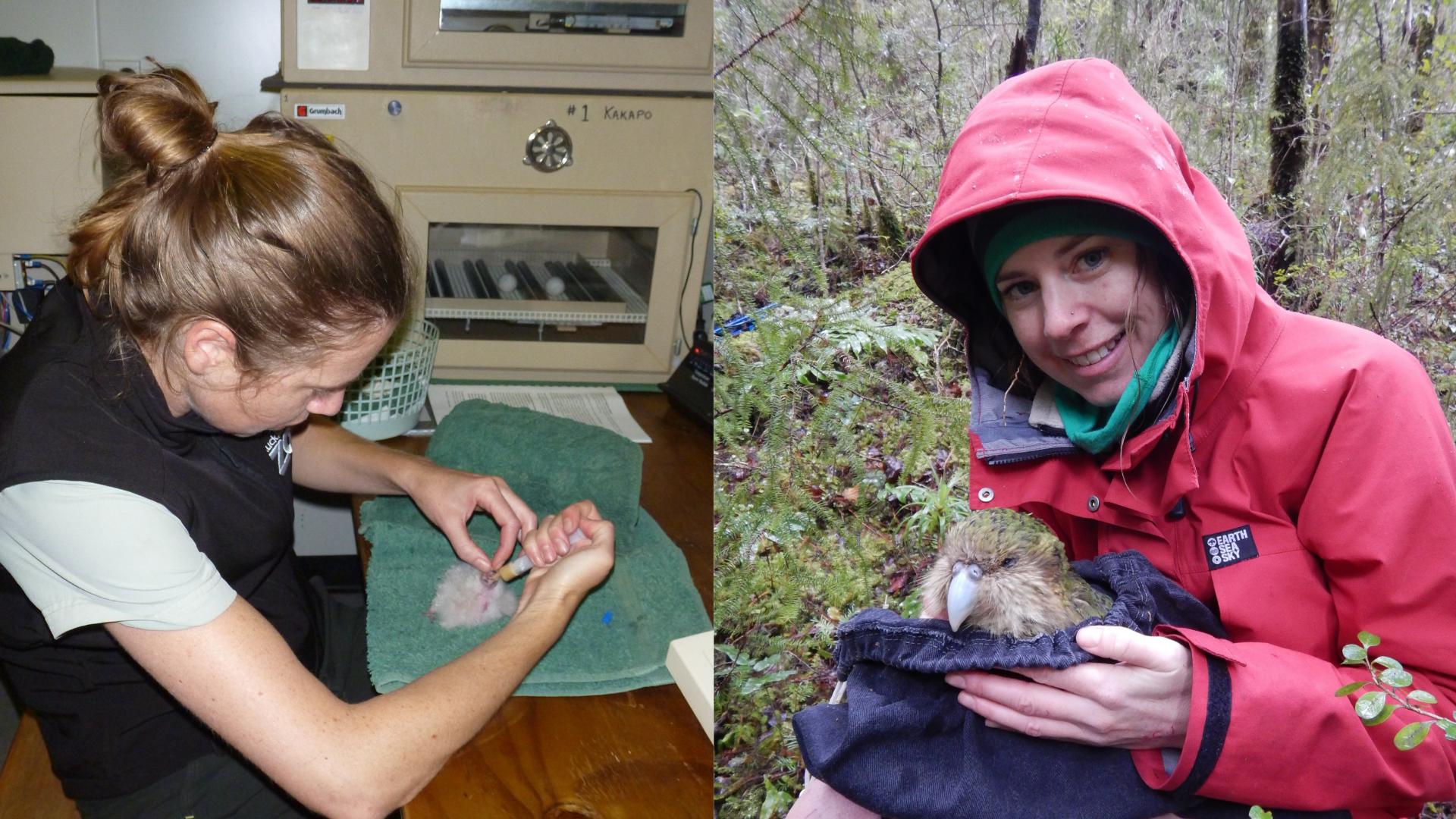 https://rfacdn.nz/zoo/assets/media/handreadring-kakapo-chicks.png