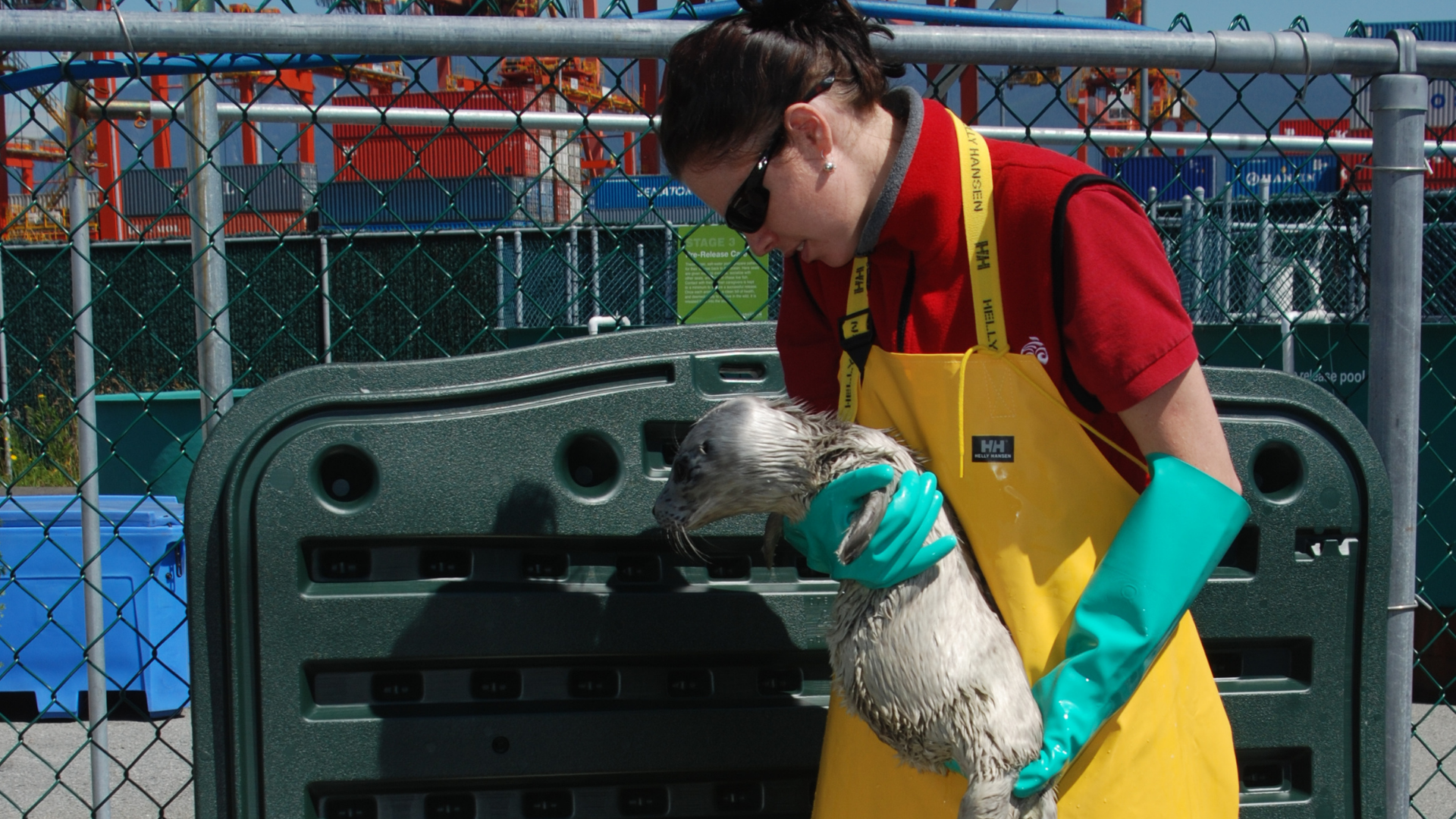 https://rfacdn.nz/zoo/assets/media/harbour-seal-rehab-in-vancouer-2.png
