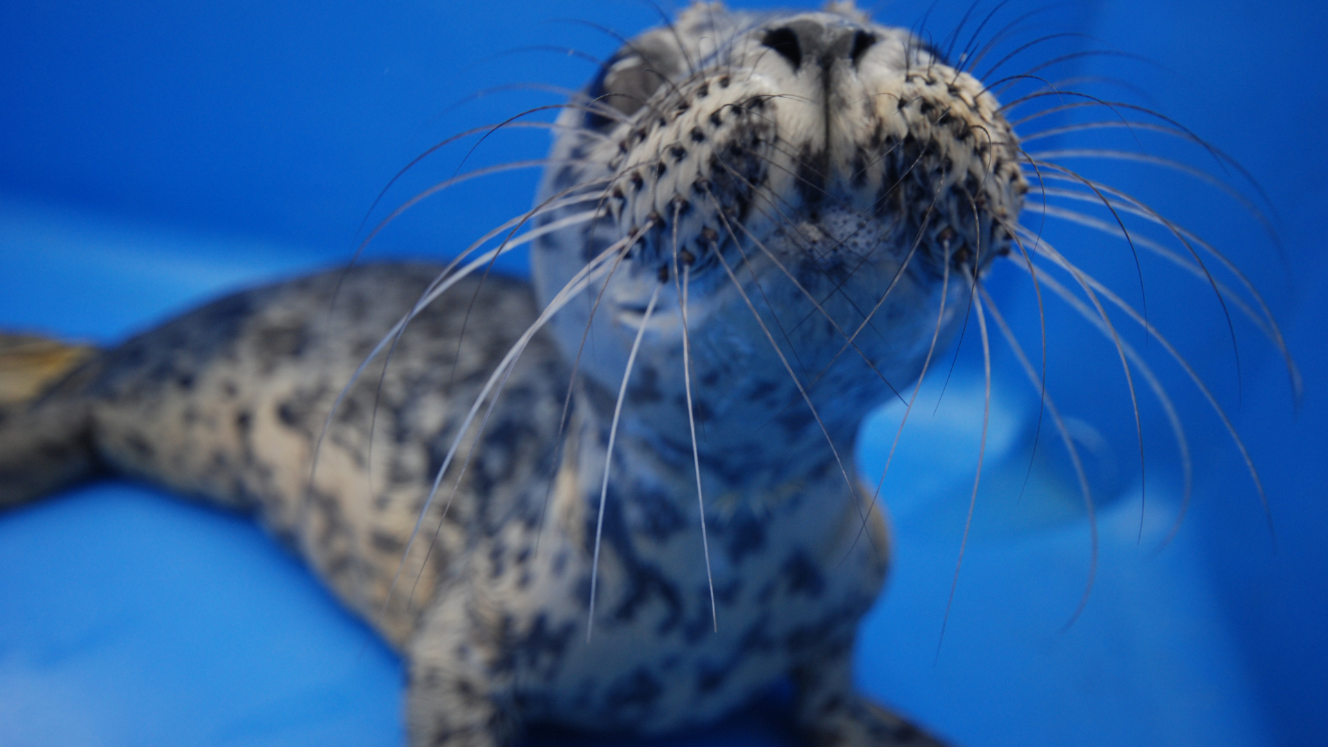 https://rfacdn.nz/zoo/assets/media/harbour-seal-rehab-in-vancouer.png