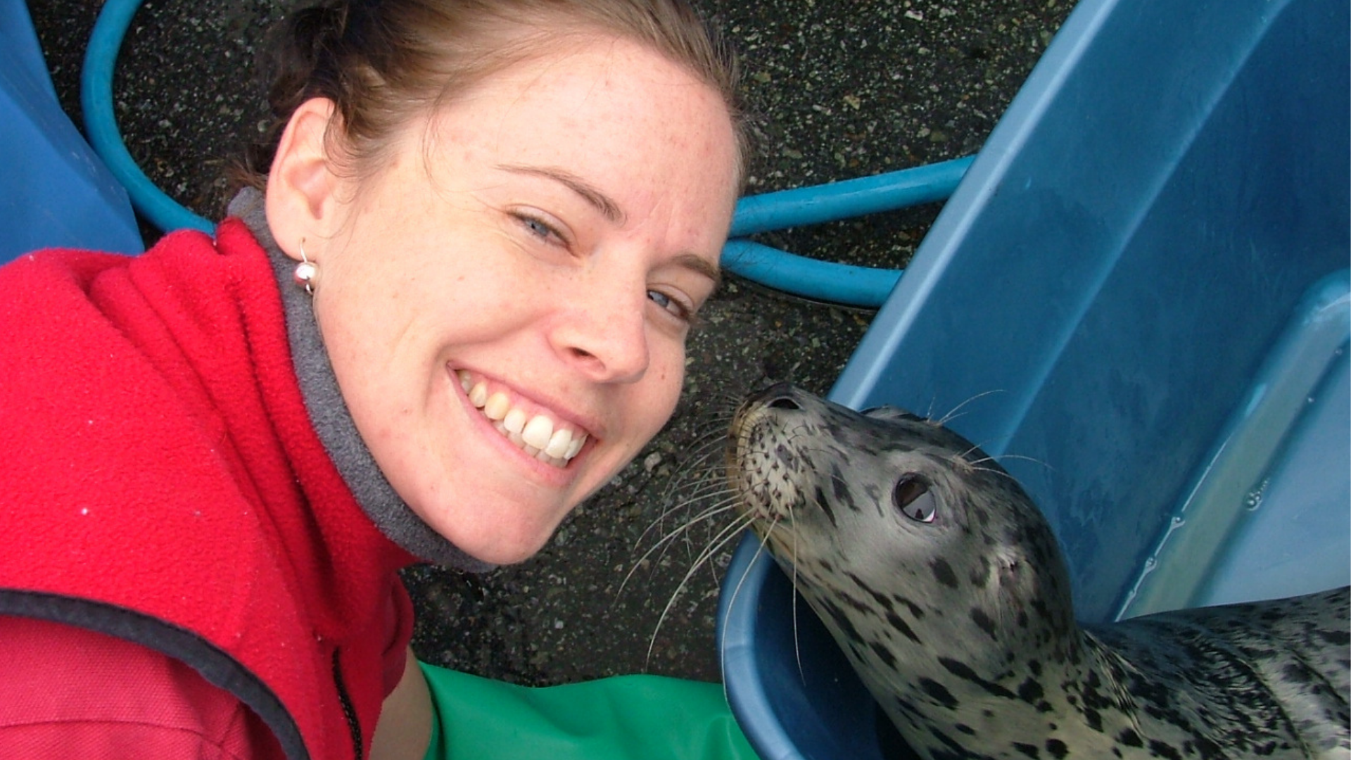 https://rfacdn.nz/zoo/assets/media/harbour-seal-rehab-in-vancouver.png