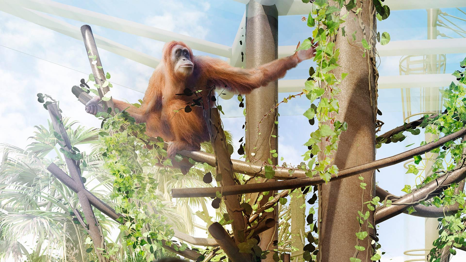 https://rfacdn.nz/zoo/assets/media/high-canopy-gallery.jpg