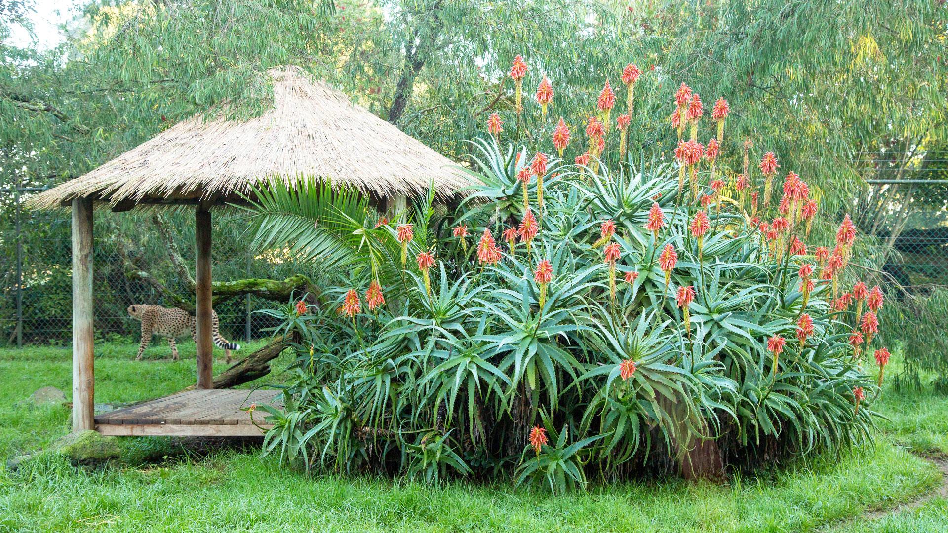 https://rfacdn.nz/zoo/assets/media/horticulture-blog-aloe-gallery-3.jpg