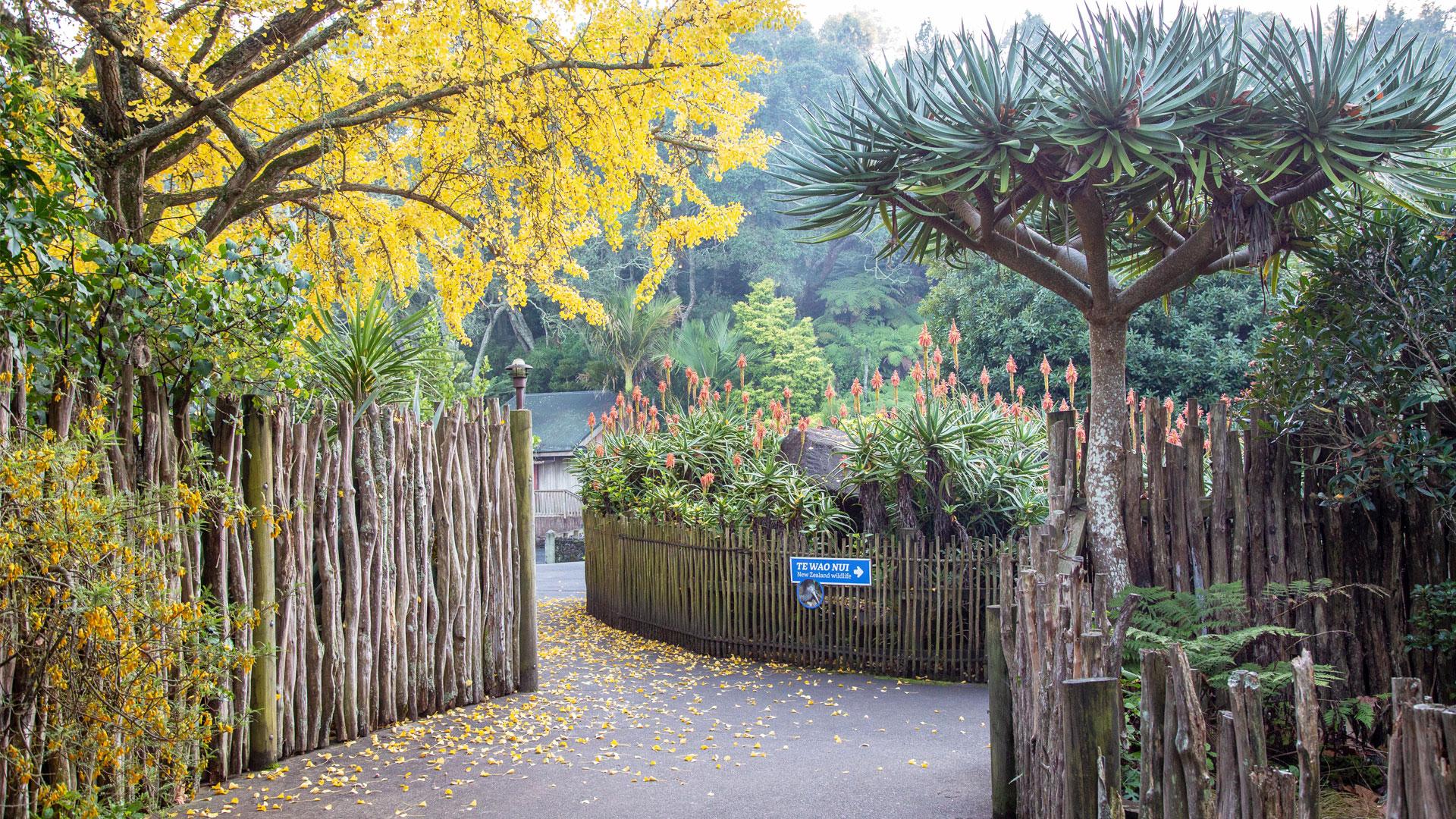 https://rfacdn.nz/zoo/assets/media/horticulture-blog-aloe-gallery-4.jpg